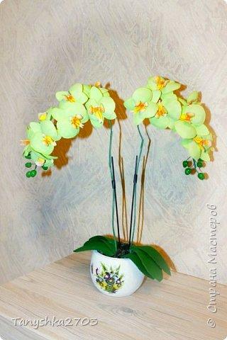 Салатовая  орхидея фото 1
