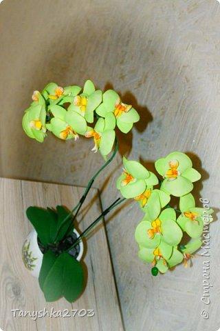 Салатовая  орхидея фото 2