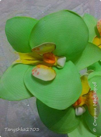 Салатовая  орхидея фото 4