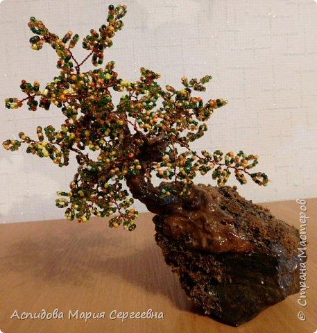 "цветок в горшке ""Немофила"" фото 4"