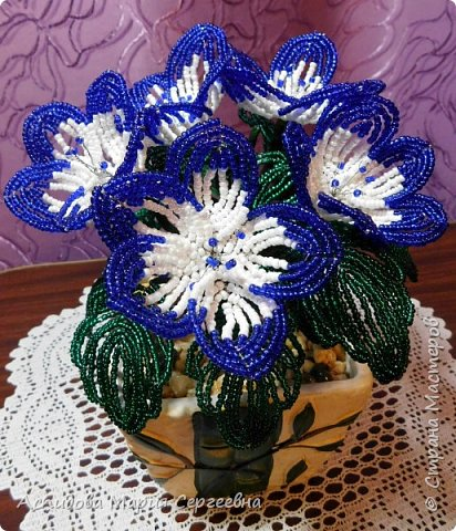 "цветок в горшке ""Немофила"" фото 1"