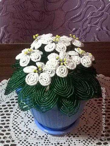"цветок в горшке ""Немофила"" фото 3"