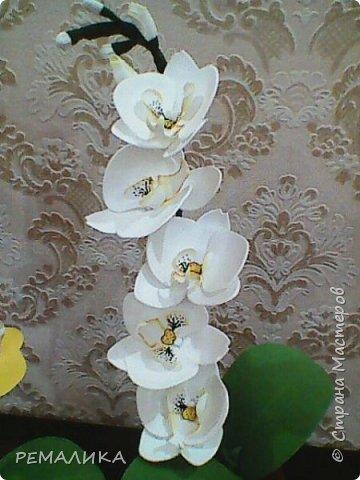 На день рождения коллегам.По этому МК http://stranamasterov.ru/node/999820?c=favorite За что огромное спасибо автору. фото 2