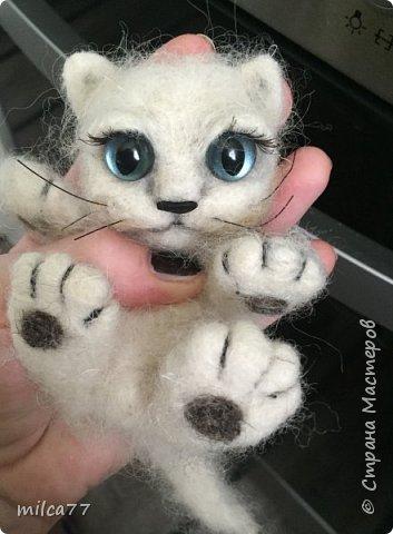 Мишка косолапый фото 3