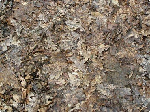 проталкиваются хохлатки, укрытые прошлогодней листвой, умываясь весенним туманом уходящего снега фото 4