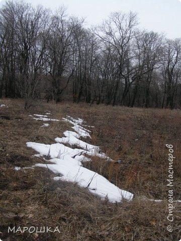 проталкиваются хохлатки, укрытые прошлогодней листвой, умываясь весенним туманом уходящего снега фото 9