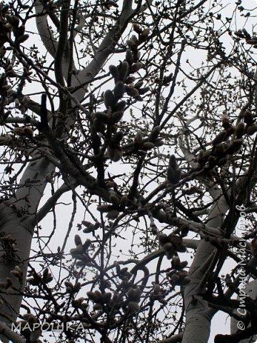 проталкиваются хохлатки, укрытые прошлогодней листвой, умываясь весенним туманом уходящего снега фото 11