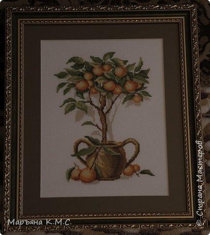 """Мне очень нравятся апельсиновые деревья. Вышила в подарок для своей кумы. В китайском языке слово """"апельсин"""" созвучно слову """"золото"""" (по-южнокитайски - КУМ, что омонимично """"золоту"""")"""