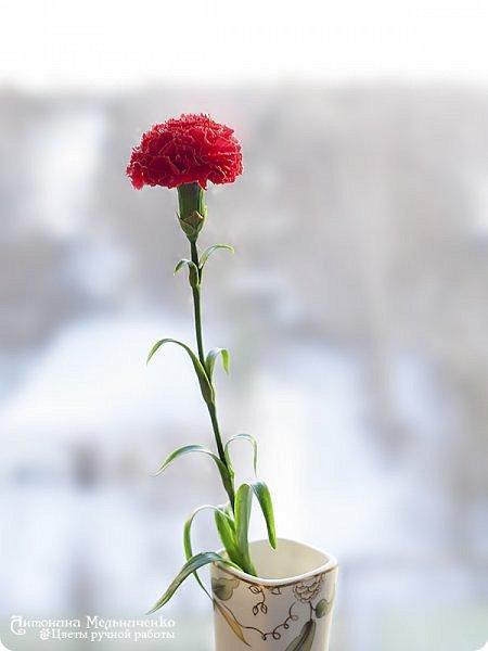"""Доброго вечера, Страна! А я к вам снова с новеньким и подарочком. Но о подарочке в конце расскажу, а сейчас о новом цветке - гвоздике. Потихоньку, между заказами долепливаю букет. Изначально я планировала 4 красных и три белых гвоздики. Но чем больше леплю, тем сильнее понимаю, что красных надо больше. Сейчас готово шесть гвоздик и планирую расширяться до 9-ти. Надеюсь, что этого числа для букета хватит. В планах купить для него вазу (скорее всего прямоугольную или цилиндрическую) и залить эпоксидной имитацией воды на разных уровнях. Но за """"водой"""" поеду только когда букетик будет готов. Надеюсь к лету управлюсь ))) фото 1"""