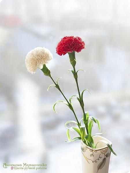 """Доброго вечера, Страна! А я к вам снова с новеньким и подарочком. Но о подарочке в конце расскажу, а сейчас о новом цветке - гвоздике. Потихоньку, между заказами долепливаю букет. Изначально я планировала 4 красных и три белых гвоздики. Но чем больше леплю, тем сильнее понимаю, что красных надо больше. Сейчас готово шесть гвоздик и планирую расширяться до 9-ти. Надеюсь, что этого числа для букета хватит. В планах купить для него вазу (скорее всего прямоугольную или цилиндрическую) и залить эпоксидной имитацией воды на разных уровнях. Но за """"водой"""" поеду только когда букетик будет готов. Надеюсь к лету управлюсь ))) фото 2"""