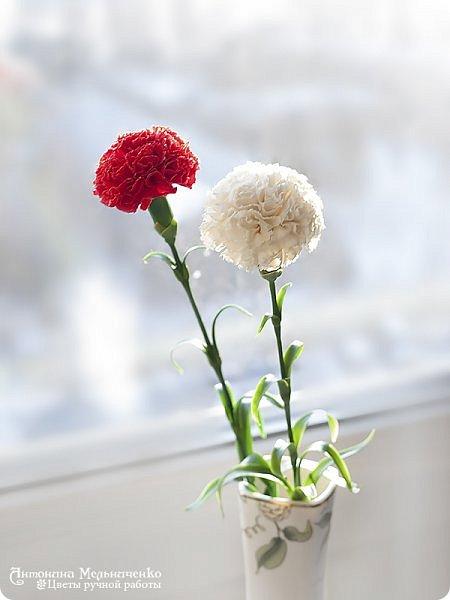 """Доброго вечера, Страна! А я к вам снова с новеньким и подарочком. Но о подарочке в конце расскажу, а сейчас о новом цветке - гвоздике. Потихоньку, между заказами долепливаю букет. Изначально я планировала 4 красных и три белых гвоздики. Но чем больше леплю, тем сильнее понимаю, что красных надо больше. Сейчас готово шесть гвоздик и планирую расширяться до 9-ти. Надеюсь, что этого числа для букета хватит. В планах купить для него вазу (скорее всего прямоугольную или цилиндрическую) и залить эпоксидной имитацией воды на разных уровнях. Но за """"водой"""" поеду только когда букетик будет готов. Надеюсь к лету управлюсь ))) фото 3"""