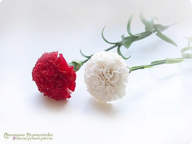 """Доброго вечера, Страна! А я к вам снова с новеньким и подарочком. Но о подарочке в конце расскажу, а сейчас о новом цветке - гвоздике. Потихоньку, между заказами долепливаю букет. Изначально я планировала 4 красных и три белых гвоздики. Но чем больше леплю, тем сильнее понимаю, что красных надо больше. Сейчас готово шесть гвоздик и планирую расширяться до 9-ти. Надеюсь, что этого числа для букета хватит. В планах купить для него вазу (скорее всего прямоугольную или цилиндрическую) и залить эпоксидной имитацией воды на разных уровнях. Но за """"водой"""" поеду только когда букетик будет готов. Надеюсь к лету управлюсь ))) фото 4"""