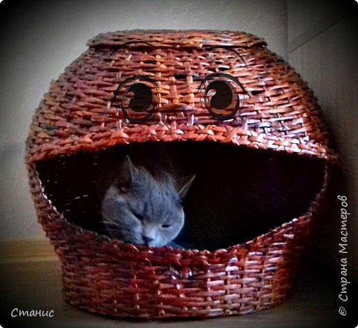 Домик для кота)