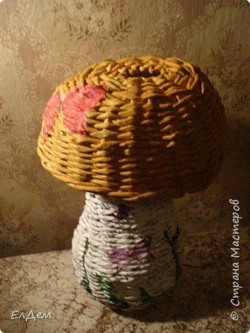 гриб копилка фото 2