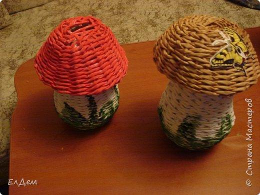 гриб копилка фото 4