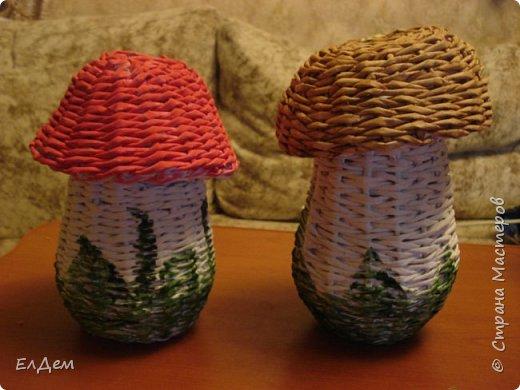 гриб копилка фото 3