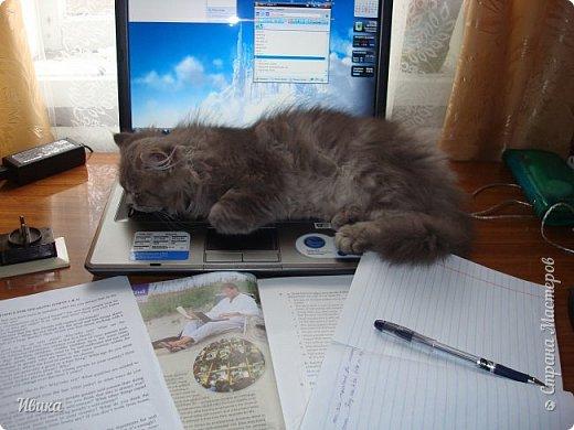"""Как я уже писала вот здесь  http://stranamasterov.ru/node/976335  у нас живут 2 кошки+2 кота и 2 собаки.  Живём мы в частном доме, места для животных больше, чем достаточно.  И наконец-то я собралась с силами и мыслями (и те и другие бывают попеременно)  написать об остальных наших любимцах.  Знакомьтесь - Томас. Он же - Сер Том. Он же - Томашек, он же- Масяня, он же - Маха. В зависимости от ситуации и степени шкодности. Таким мы принесли его домой 7 лет назад. История появления - это отдельная история. После того, как у нас пропал бесследно очередной кот, после наших с дочей слёз по поводу пропажи, муж сказал: """"Никаких котов! Хватит!""""  Оно и понятно, вынянчили, выкормили, обласканный, зацелованный всеми. Знакомо, думаю, многим любителям этих хвостатых. Но... в очередной поход на рынок с дочей и будущим зятем, при входе в рынок, увидели дяденьку, продающего эту серую прелесть! В машине их было штук 6-7. Остановились посмотреть.  Ушли с покупкой, после уговоров дочи и зятя: """"Ну посмотри какие красивые! Ну давай возьмём!""""  Мои аргументы, что папа против, были отброшены одним аргументом: """"Ну он же его ещё не видел! Он же - няшка! Папа его сразу полюбит!"""" Да и как его можно было не полюбить! Взяли. Несём папе. Кто признается в покупке?!  Мама, конечно же! Но показали Томаса папе дети. И... папа влюбился в него с первого взгляда! А эта серая шкодина и сейчас отдаёт ему предпочтение между всеми нами! Имя ему придумывали не очень долго. Как-то само пришло - Том, Томас. фото 4"""