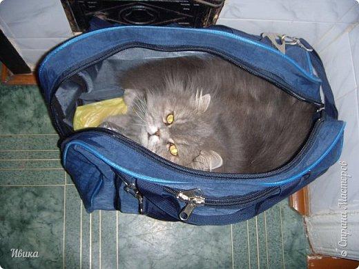"""Как я уже писала вот здесь  http://stranamasterov.ru/node/976335  у нас живут 2 кошки+2 кота и 2 собаки.  Живём мы в частном доме, места для животных больше, чем достаточно.  И наконец-то я собралась с силами и мыслями (и те и другие бывают попеременно)  написать об остальных наших любимцах.  Знакомьтесь - Томас. Он же - Сер Том. Он же - Томашек, он же- Масяня, он же - Маха. В зависимости от ситуации и степени шкодности. Таким мы принесли его домой 7 лет назад. История появления - это отдельная история. После того, как у нас пропал бесследно очередной кот, после наших с дочей слёз по поводу пропажи, муж сказал: """"Никаких котов! Хватит!""""  Оно и понятно, вынянчили, выкормили, обласканный, зацелованный всеми. Знакомо, думаю, многим любителям этих хвостатых. Но... в очередной поход на рынок с дочей и будущим зятем, при входе в рынок, увидели дяденьку, продающего эту серую прелесть! В машине их было штук 6-7. Остановились посмотреть.  Ушли с покупкой, после уговоров дочи и зятя: """"Ну посмотри какие красивые! Ну давай возьмём!""""  Мои аргументы, что папа против, были отброшены одним аргументом: """"Ну он же его ещё не видел! Он же - няшка! Папа его сразу полюбит!"""" Да и как его можно было не полюбить! Взяли. Несём папе. Кто признается в покупке?!  Мама, конечно же! Но показали Томаса папе дети. И... папа влюбился в него с первого взгляда! А эта серая шкодина и сейчас отдаёт ему предпочтение между всеми нами! Имя ему придумывали не очень долго. Как-то само пришло - Том, Томас. фото 13"""