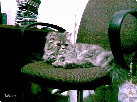 """Как я уже писала вот здесь  http://stranamasterov.ru/node/976335  у нас живут 2 кошки+2 кота и 2 собаки.  Живём мы в частном доме, места для животных больше, чем достаточно.  И наконец-то я собралась с силами и мыслями (и те и другие бывают попеременно)  написать об остальных наших любимцах.  Знакомьтесь - Томас. Он же - Сер Том. Он же - Томашек, он же- Масяня, он же - Маха. В зависимости от ситуации и степени шкодности. Таким мы принесли его домой 7 лет назад. История появления - это отдельная история. После того, как у нас пропал бесследно очередной кот, после наших с дочей слёз по поводу пропажи, муж сказал: """"Никаких котов! Хватит!""""  Оно и понятно, вынянчили, выкормили, обласканный, зацелованный всеми. Знакомо, думаю, многим любителям этих хвостатых. Но... в очередной поход на рынок с дочей и будущим зятем, при входе в рынок, увидели дяденьку, продающего эту серую прелесть! В машине их было штук 6-7. Остановились посмотреть.  Ушли с покупкой, после уговоров дочи и зятя: """"Ну посмотри какие красивые! Ну давай возьмём!""""  Мои аргументы, что папа против, были отброшены одним аргументом: """"Ну он же его ещё не видел! Он же - няшка! Папа его сразу полюбит!"""" Да и как его можно было не полюбить! Взяли. Несём папе. Кто признается в покупке?!  Мама, конечно же! Но показали Томаса папе дети. И... папа влюбился в него с первого взгляда! А эта серая шкодина и сейчас отдаёт ему предпочтение между всеми нами! Имя ему придумывали не очень долго. Как-то само пришло - Том, Томас. фото 6"""