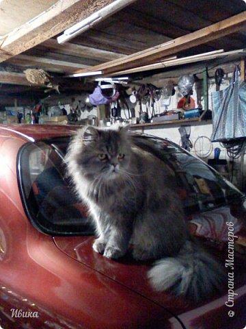 """Как я уже писала вот здесь  http://stranamasterov.ru/node/976335  у нас живут 2 кошки+2 кота и 2 собаки.  Живём мы в частном доме, места для животных больше, чем достаточно.  И наконец-то я собралась с силами и мыслями (и те и другие бывают попеременно)  написать об остальных наших любимцах.  Знакомьтесь - Томас. Он же - Сер Том. Он же - Томашек, он же- Масяня, он же - Маха. В зависимости от ситуации и степени шкодности. Таким мы принесли его домой 7 лет назад. История появления - это отдельная история. После того, как у нас пропал бесследно очередной кот, после наших с дочей слёз по поводу пропажи, муж сказал: """"Никаких котов! Хватит!""""  Оно и понятно, вынянчили, выкормили, обласканный, зацелованный всеми. Знакомо, думаю, многим любителям этих хвостатых. Но... в очередной поход на рынок с дочей и будущим зятем, при входе в рынок, увидели дяденьку, продающего эту серую прелесть! В машине их было штук 6-7. Остановились посмотреть.  Ушли с покупкой, после уговоров дочи и зятя: """"Ну посмотри какие красивые! Ну давай возьмём!""""  Мои аргументы, что папа против, были отброшены одним аргументом: """"Ну он же его ещё не видел! Он же - няшка! Папа его сразу полюбит!"""" Да и как его можно было не полюбить! Взяли. Несём папе. Кто признается в покупке?!  Мама, конечно же! Но показали Томаса папе дети. И... папа влюбился в него с первого взгляда! А эта серая шкодина и сейчас отдаёт ему предпочтение между всеми нами! Имя ему придумывали не очень долго. Как-то само пришло - Том, Томас. фото 19"""