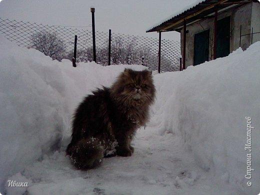 """Как я уже писала вот здесь  http://stranamasterov.ru/node/976335  у нас живут 2 кошки+2 кота и 2 собаки.  Живём мы в частном доме, места для животных больше, чем достаточно.  И наконец-то я собралась с силами и мыслями (и те и другие бывают попеременно)  написать об остальных наших любимцах.  Знакомьтесь - Томас. Он же - Сер Том. Он же - Томашек, он же- Масяня, он же - Маха. В зависимости от ситуации и степени шкодности. Таким мы принесли его домой 7 лет назад. История появления - это отдельная история. После того, как у нас пропал бесследно очередной кот, после наших с дочей слёз по поводу пропажи, муж сказал: """"Никаких котов! Хватит!""""  Оно и понятно, вынянчили, выкормили, обласканный, зацелованный всеми. Знакомо, думаю, многим любителям этих хвостатых. Но... в очередной поход на рынок с дочей и будущим зятем, при входе в рынок, увидели дяденьку, продающего эту серую прелесть! В машине их было штук 6-7. Остановились посмотреть.  Ушли с покупкой, после уговоров дочи и зятя: """"Ну посмотри какие красивые! Ну давай возьмём!""""  Мои аргументы, что папа против, были отброшены одним аргументом: """"Ну он же его ещё не видел! Он же - няшка! Папа его сразу полюбит!"""" Да и как его можно было не полюбить! Взяли. Несём папе. Кто признается в покупке?!  Мама, конечно же! Но показали Томаса папе дети. И... папа влюбился в него с первого взгляда! А эта серая шкодина и сейчас отдаёт ему предпочтение между всеми нами! Имя ему придумывали не очень долго. Как-то само пришло - Том, Томас. фото 28"""