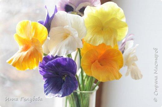 Теплым и солнечным, радостным летом синим и белым, и смешанным цветом, шепчут весёлые, яркие сказки эти цветочки АНЮТИНЫ ГЛАЗКИ.  Бабочек, синих и жёлтых, и белых много на клумбу цветочную село. Сами узнаете их без подсказки это цветочки - АНЮТИНЫ ГЛАЗКИ  О. Огланова Вот такую клумбочку слепила на заказ) фото 7