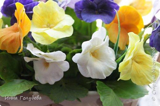 Теплым и солнечным, радостным летом синим и белым, и смешанным цветом, шепчут весёлые, яркие сказки эти цветочки АНЮТИНЫ ГЛАЗКИ.  Бабочек, синих и жёлтых, и белых много на клумбу цветочную село. Сами узнаете их без подсказки это цветочки - АНЮТИНЫ ГЛАЗКИ  О. Огланова Вот такую клумбочку слепила на заказ) фото 19