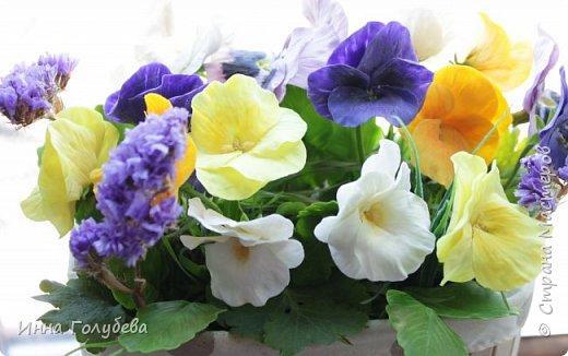 Теплым и солнечным, радостным летом синим и белым, и смешанным цветом, шепчут весёлые, яркие сказки эти цветочки АНЮТИНЫ ГЛАЗКИ.  Бабочек, синих и жёлтых, и белых много на клумбу цветочную село. Сами узнаете их без подсказки это цветочки - АНЮТИНЫ ГЛАЗКИ  О. Огланова Вот такую клумбочку слепила на заказ) фото 17