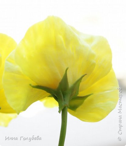 Теплым и солнечным, радостным летом синим и белым, и смешанным цветом, шепчут весёлые, яркие сказки эти цветочки АНЮТИНЫ ГЛАЗКИ.  Бабочек, синих и жёлтых, и белых много на клумбу цветочную село. Сами узнаете их без подсказки это цветочки - АНЮТИНЫ ГЛАЗКИ  О. Огланова Вот такую клумбочку слепила на заказ) фото 8