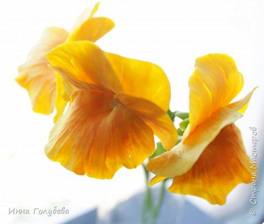 Теплым и солнечным, радостным летом синим и белым, и смешанным цветом, шепчут весёлые, яркие сказки эти цветочки АНЮТИНЫ ГЛАЗКИ.  Бабочек, синих и жёлтых, и белых много на клумбу цветочную село. Сами узнаете их без подсказки это цветочки - АНЮТИНЫ ГЛАЗКИ  О. Огланова Вот такую клумбочку слепила на заказ) фото 9