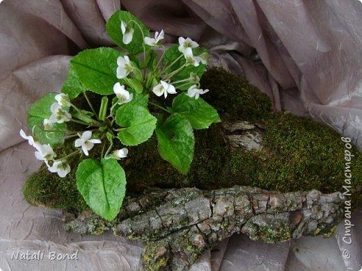 Доброго дня СМ!!!Давно не выкладывала,вот не смогла пройти мимо этого милого цветочка,как они мне нравятся....Вот результат! фото 1