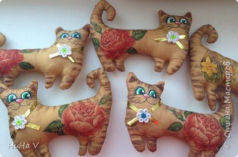 Котики фото 2