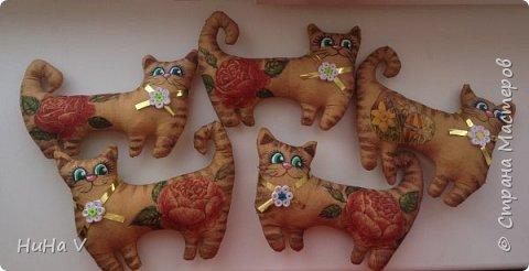 Котики фото 3