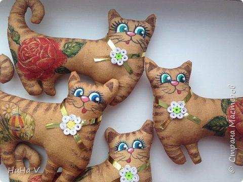 Котики фото 12