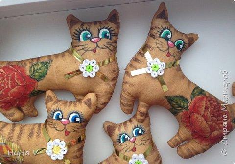 Котики фото 13