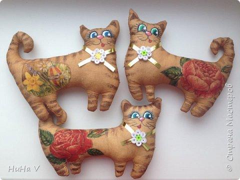 Котики фото 15