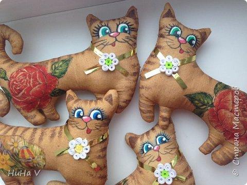 Котики фото 1