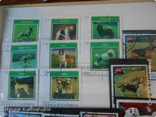 С 90-х годов лежит у нас дома коллекция марок. Начинаю показ с животных: коты, собаки, кони. Эти коты из Экваториальной Гвинеи - так написано. фото 17