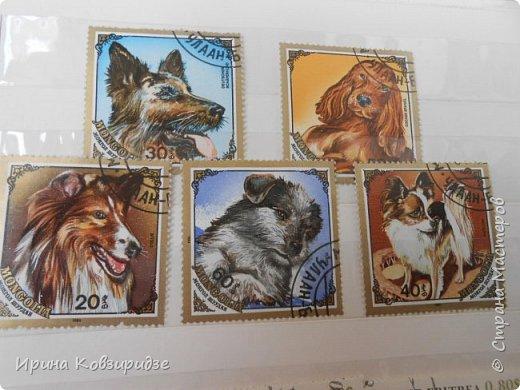 С 90-х годов лежит у нас дома коллекция марок. Начинаю показ с животных: коты, собаки, кони. Эти коты из Экваториальной Гвинеи - так написано. фото 8
