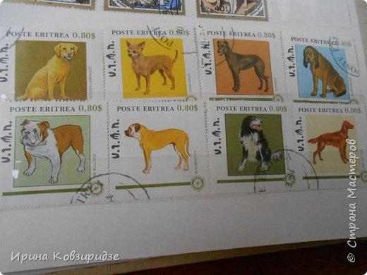 С 90-х годов лежит у нас дома коллекция марок. Начинаю показ с животных: коты, собаки, кони. Эти коты из Экваториальной Гвинеи - так написано. фото 9