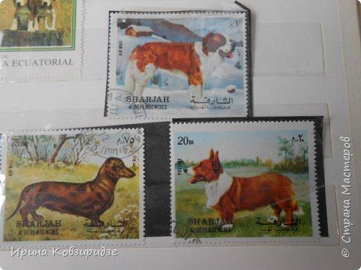 С 90-х годов лежит у нас дома коллекция марок. Начинаю показ с животных: коты, собаки, кони. Эти коты из Экваториальной Гвинеи - так написано. фото 11