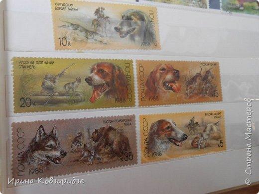 С 90-х годов лежит у нас дома коллекция марок. Начинаю показ с животных: коты, собаки, кони. Эти коты из Экваториальной Гвинеи - так написано. фото 13
