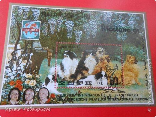С 90-х годов лежит у нас дома коллекция марок. Начинаю показ с животных: коты, собаки, кони. Эти коты из Экваториальной Гвинеи - так написано. фото 7