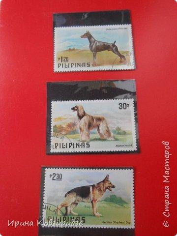 С 90-х годов лежит у нас дома коллекция марок. Начинаю показ с животных: коты, собаки, кони. Эти коты из Экваториальной Гвинеи - так написано. фото 12