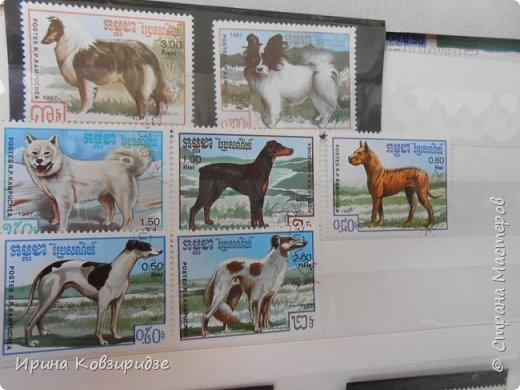 С 90-х годов лежит у нас дома коллекция марок. Начинаю показ с животных: коты, собаки, кони. Эти коты из Экваториальной Гвинеи - так написано. фото 15