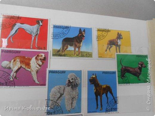С 90-х годов лежит у нас дома коллекция марок. Начинаю показ с животных: коты, собаки, кони. Эти коты из Экваториальной Гвинеи - так написано. фото 16