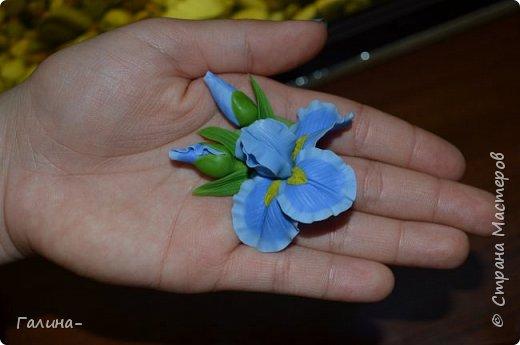 """здравствуйте ! хочу поделиться веточкой жасмина , тюльпаном и брошью с ирисом , я их лепила на мк """"шедевры из глины и фарфора"""" фото 6"""