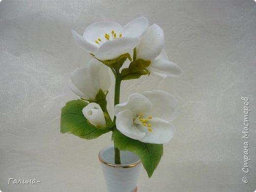 """здравствуйте ! хочу поделиться веточкой жасмина , тюльпаном и брошью с ирисом , я их лепила на мк """"шедевры из глины и фарфора"""" фото 2"""