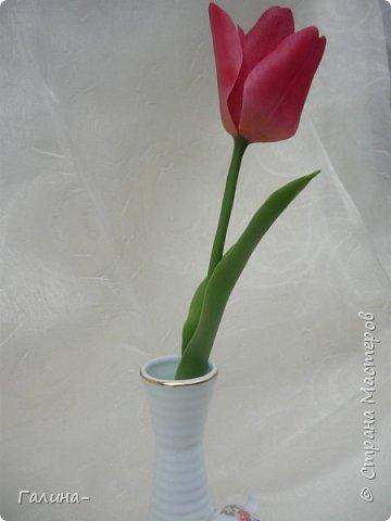 """здравствуйте ! хочу поделиться веточкой жасмина , тюльпаном и брошью с ирисом , я их лепила на мк """"шедевры из глины и фарфора"""" фото 5"""