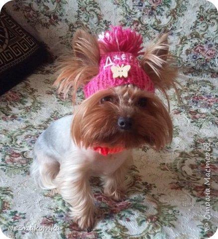 Всем привет! Хочу поделиться своим новым увлечением , а именно: вязание нарядов для животных.  фото 1